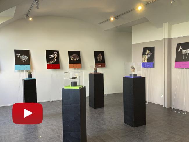 OCTOBRE 2021 – Exposition VIVACES À La Maison de la Baie de Hillion (22)
