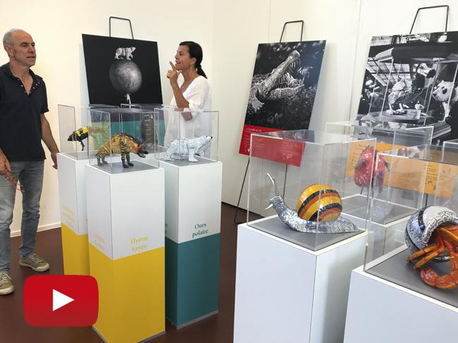 L'EXPO DUO DE BESTIOLES À LA MÉDIATHÈQUE D'YFFINIAC (22)